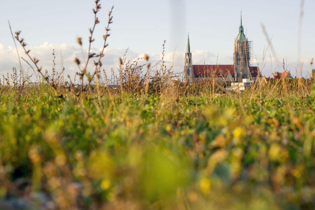 Die Paulskirche in München am Horizont mit Gras auf der Theresienwiese im Vordergrund