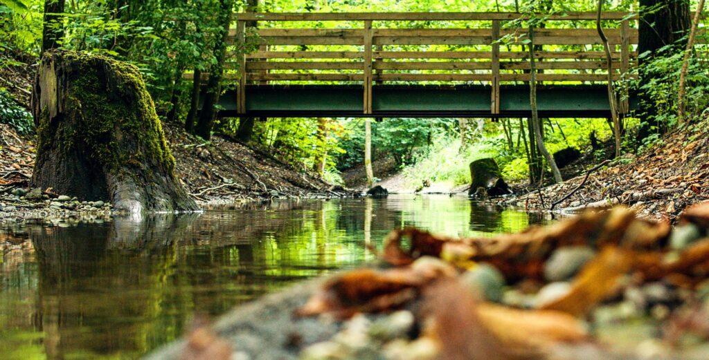 Blick auf eine Brücke über einem Bach und einem moosbewachsenem Baumstumpf am Ufer