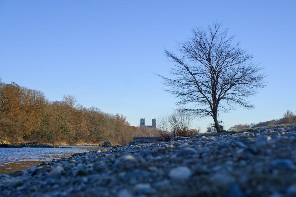 Isarstrand mit Baum und Kirchtürmen im Hintergrund